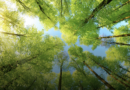 「環境の保全」が新しい重点分野に